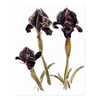 black iris of Jordan Postcard
