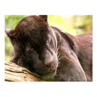 Black Jaguar in Tree Postcard