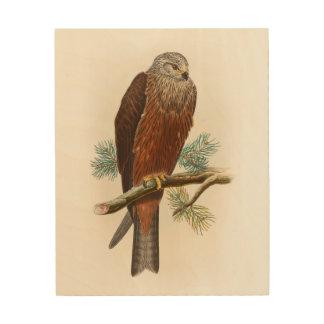 Black Kite Hawk John Gould Birds of Great Britain Wood Print
