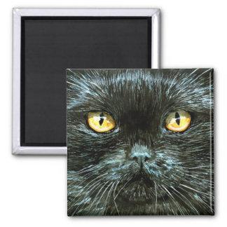 Black kitten cat face, Halloween magnet