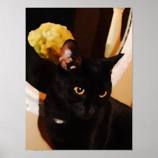 Black Kitty Poster