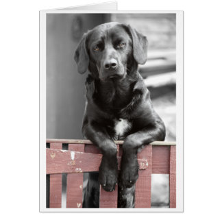 Black Lab at the Red Gate Greeting Card