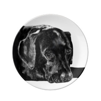 Black Lab called Charley Plate