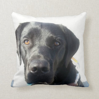 Black Lab Cushion