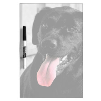 Black Lab Dog Selective Color Dry Erase Board