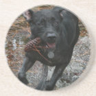 Black Lab Dog with Pinecone running Coaster