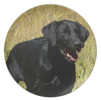 Black Lab in Field Plate