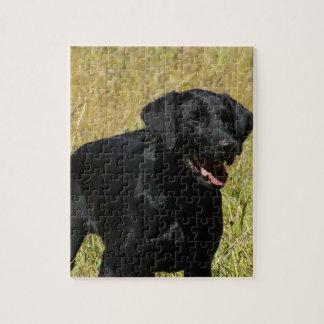 Black Lab in Field Puzzle