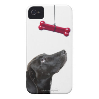 Black lab mixed dog with red dog bone iPhone 4 cover