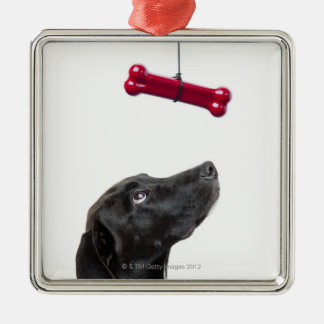 Black lab mixed dog with red dog bone Silver-Colored square ornament