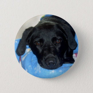 Black Lab Puppy 2 Inch Round Button