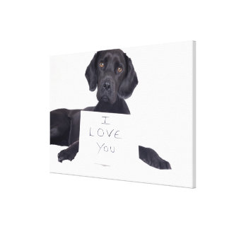Black Labrador 13 Months Gallery Wrapped Canvas