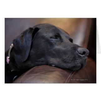 Black labrador asleep on sofa, close-up card