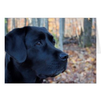 Black labrador - Autumn Glow Card