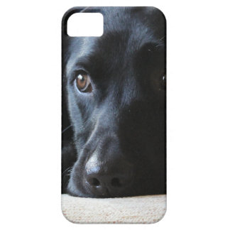 Black Labrador Case For The iPhone 5