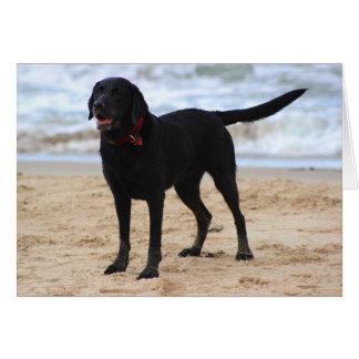 Black Labrador Dog Card