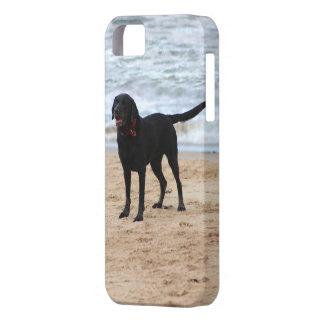 Black Labrador Dog iPhone 5 Case