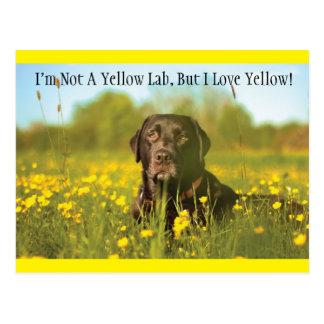 Black Labrador Dog Postcard