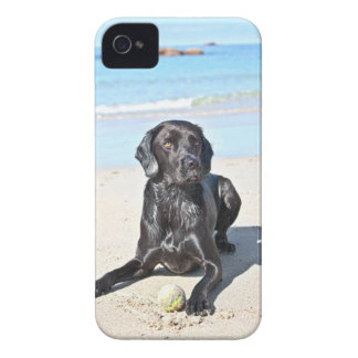 Black Labrador Dog sitting on the Beach Case-Mate iPhone 4 Cases