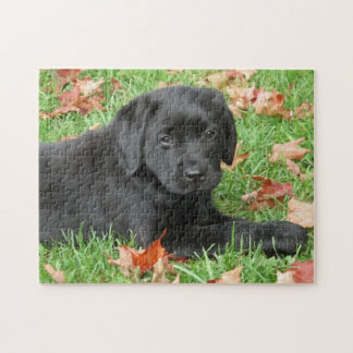 Black Labrador - Joy of Autumn Jigsaw Puzzle