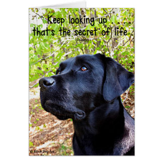 Black Labrador - Keep Looking Up Card