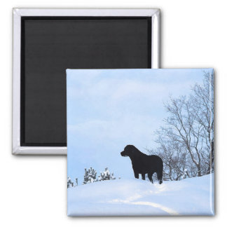 Black Labrador - Leave a Trail Magnet