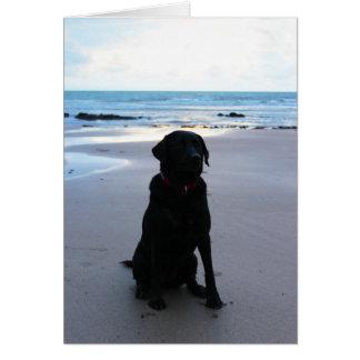 Black Labrador on a beach Card