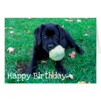Black Labrador - Play Ball Card
