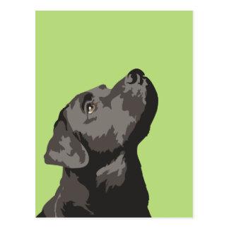 Black Labrador Postcard (Choose Your Own Colour)