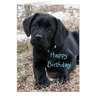 Black Labrador Puppy - Awaiting Spring Card