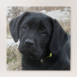 Black Labrador Puppy - Awaiting Spring Jigsaw Puzzle