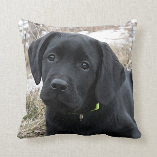 Black Labrador Puppy - Early Spring Hunt Throw Pillow