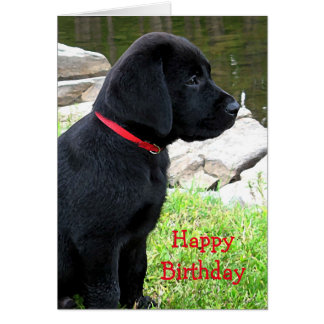 Black Labrador Puppy - Little Red Collar Card