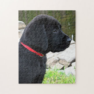 Black Labrador Puppy - Little Red Collar Jigsaw Puzzle