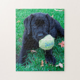Black Labrador Puppy - Play Ball Jigsaw Puzzle