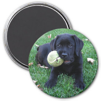 Black Labrador Puppy - Play Ball Magnet