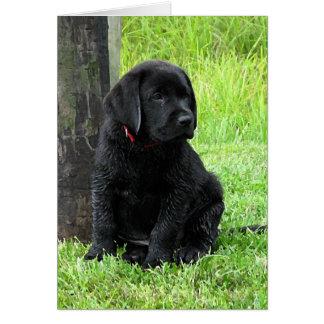 Black Labrador Puppy - Puppy Days of Summer Card