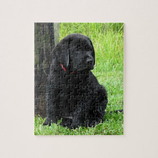 Black Labrador Puppy - Puppy Days of Summer Jigsaw Puzzle