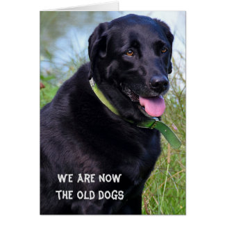 Black Labrador Retriever birthday humor Card