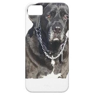 Black Labrador Retriever iPhone 5/5S Covers