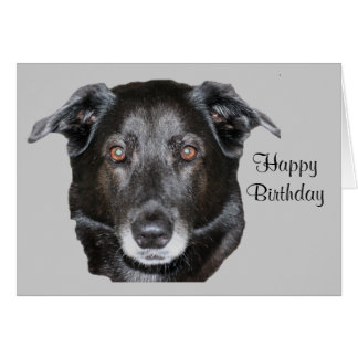 Black Labrador Retriever Dog Birthday Card