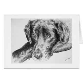 Black Labrador Retriever from Pen and Ink Drawing Card