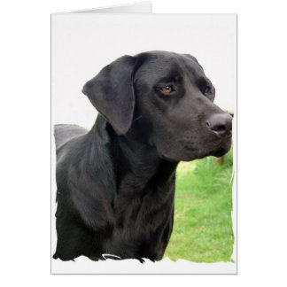 Black Labrador Retriever Greeting Card