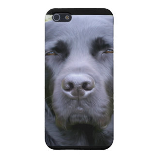 Black Labrador Retriever iPhone 5/5S Case