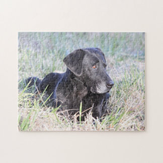 Black Labrador Retriever Jigsaw Puzzle
