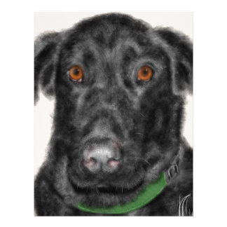 Black Labrador retriever Letterhead