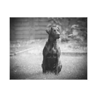 Black Labrador Retriever Puppy Canvas Print