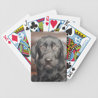 Black Labrador Retriever Puppy Dog Photo Bicycle Playing Cards