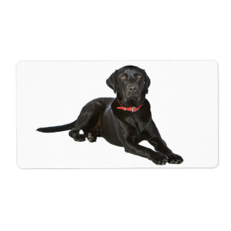 Black Labrador Retriever  Puppy Dog Sticker