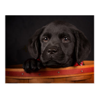 Black labrador retriever puppy in a basket postcard